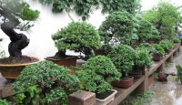 how-to-grow-bonsai-trees2