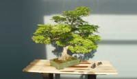 bonsai-tree-lighting